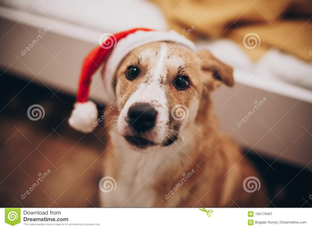 Cute Golden Dog In Red Santa Claus Hat Looking With Adorable Eye