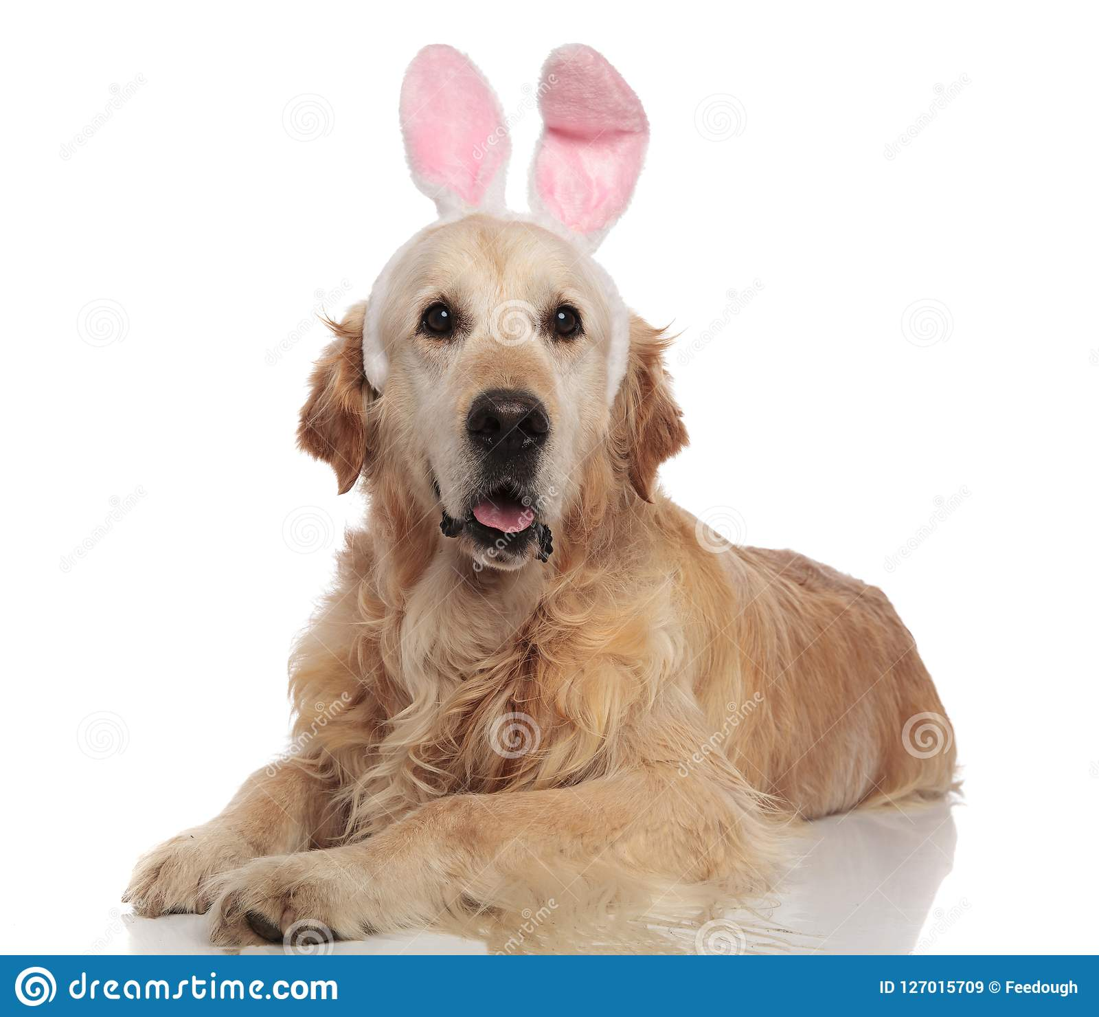 129 Golden Retriever Halloween Costume Photos Free Royalty Free Stock Photos From Dreamstime