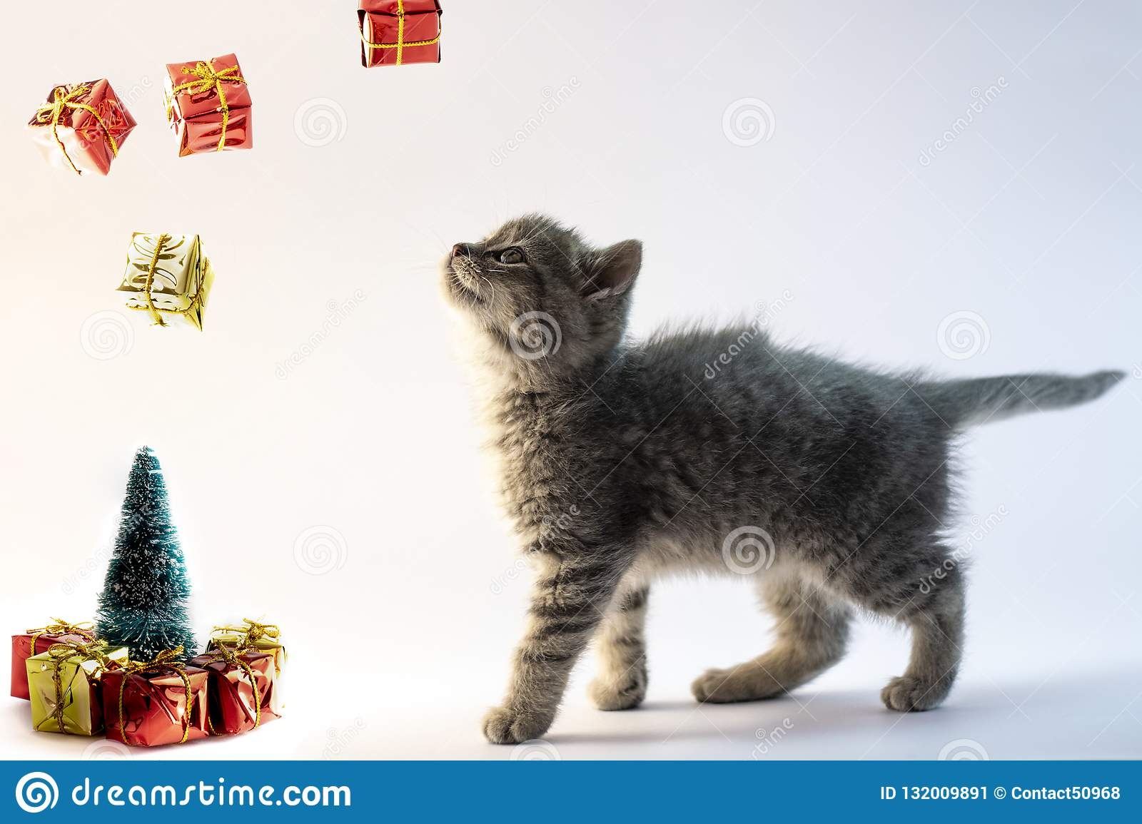 Cute gray cat looking to the falling presents from the air