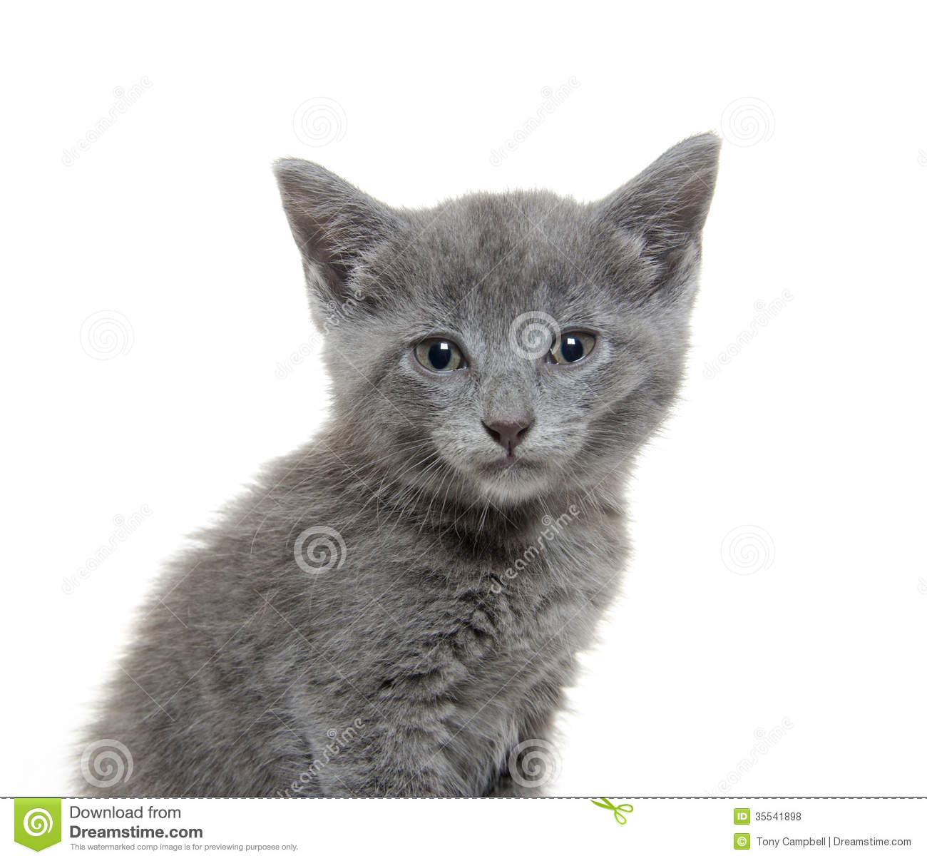 how to draw a cute gray kitten