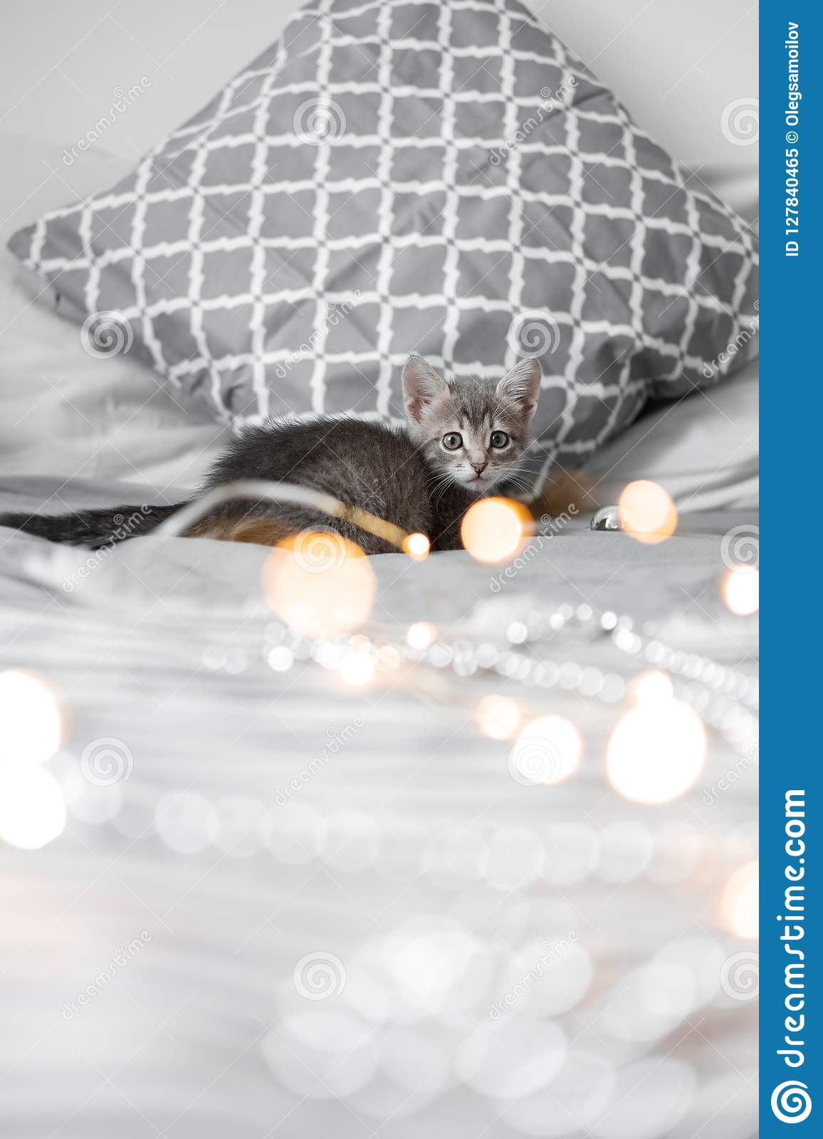 Cute gray kitten playing with Christmas toys on a bokeh background