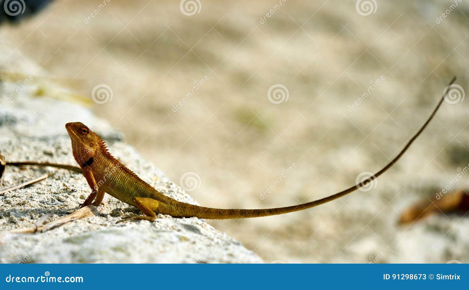 Cute green lizard sits on sand