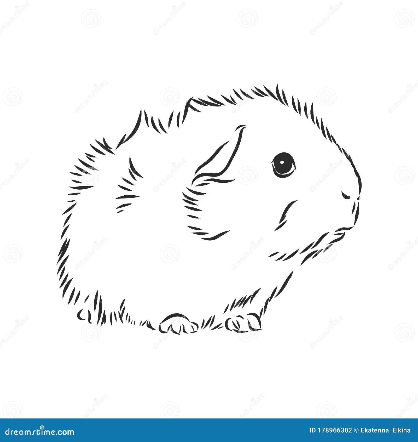 Cute Guinea Pig Pet Vector Sketch Illustration Stock Illustration Illustration Of Drawing Funny 178966302
