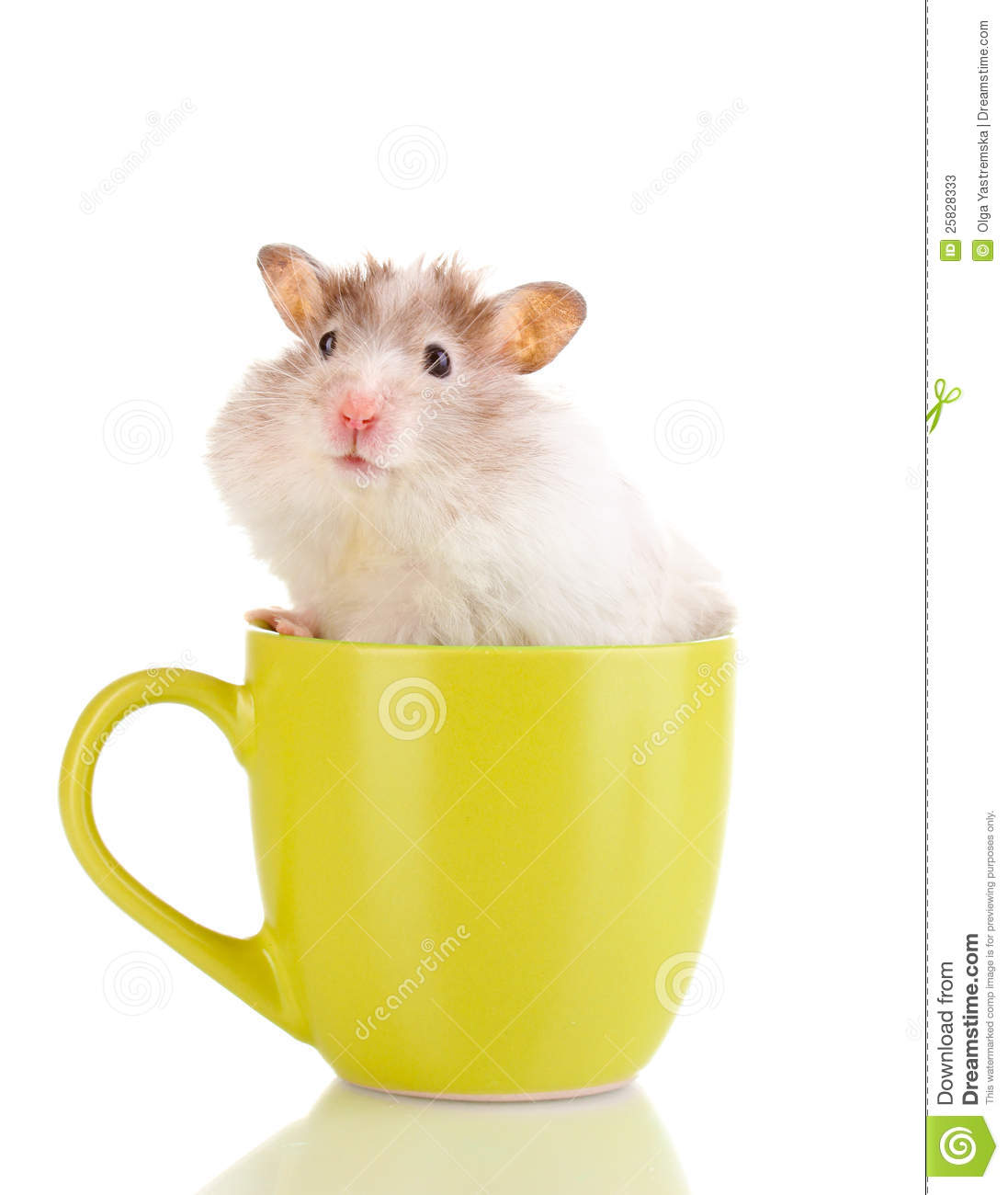how to make thyme tea for hamsters