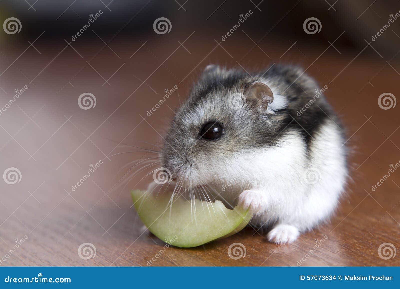 kan hamstrar äta äpple