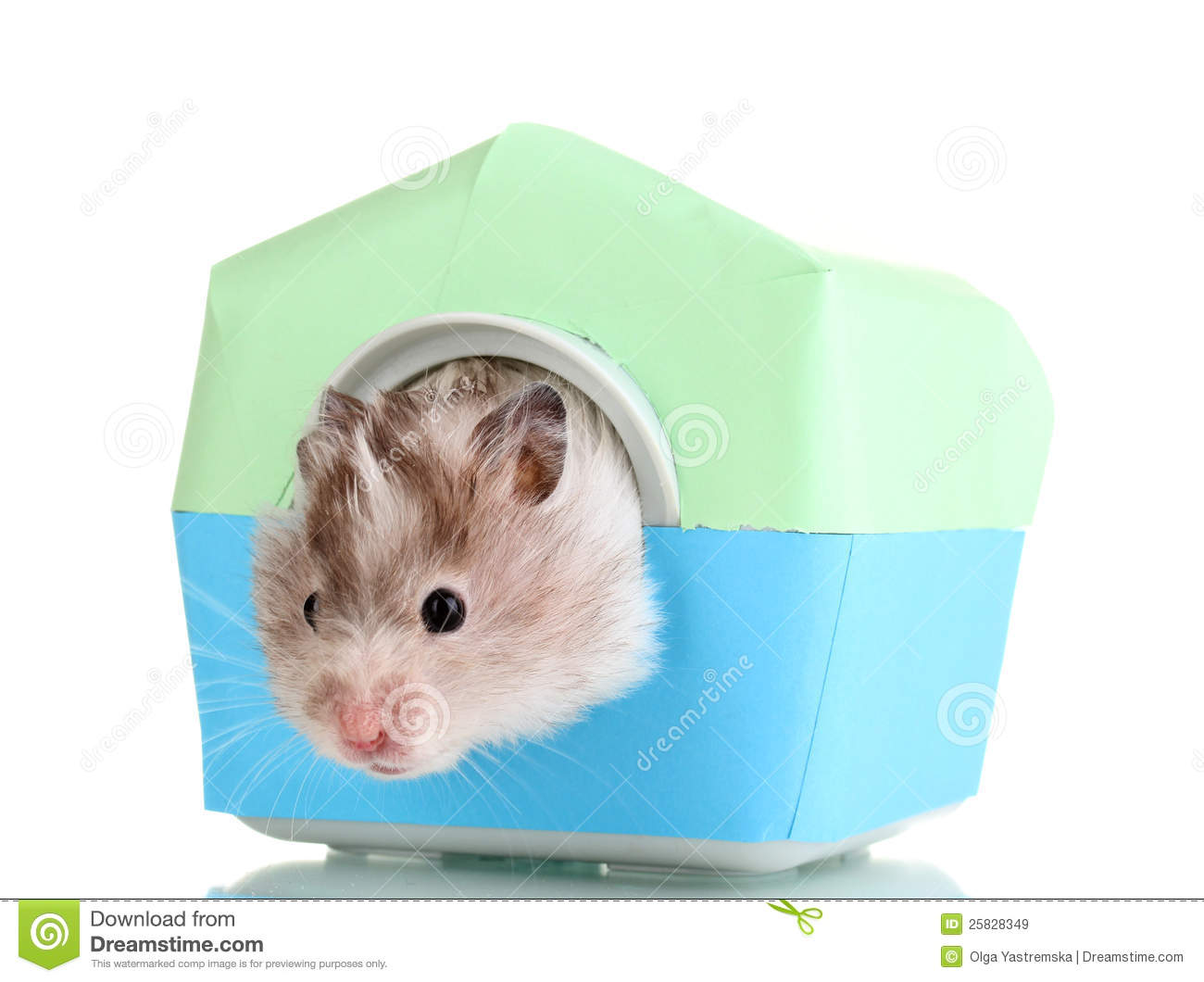 cute hamster in house royalty free stock images image 25828349. Black Bedroom Furniture Sets. Home Design Ideas