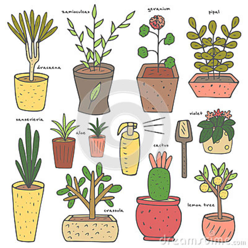 Cute Hand Drawn Doodle House Plants Collection Stock Vector