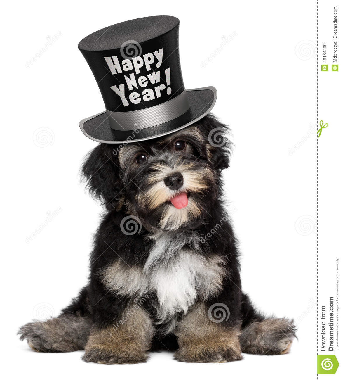cute havanese puppy dog is wearing a happy new year top hat stock photo 36164899 megapixl