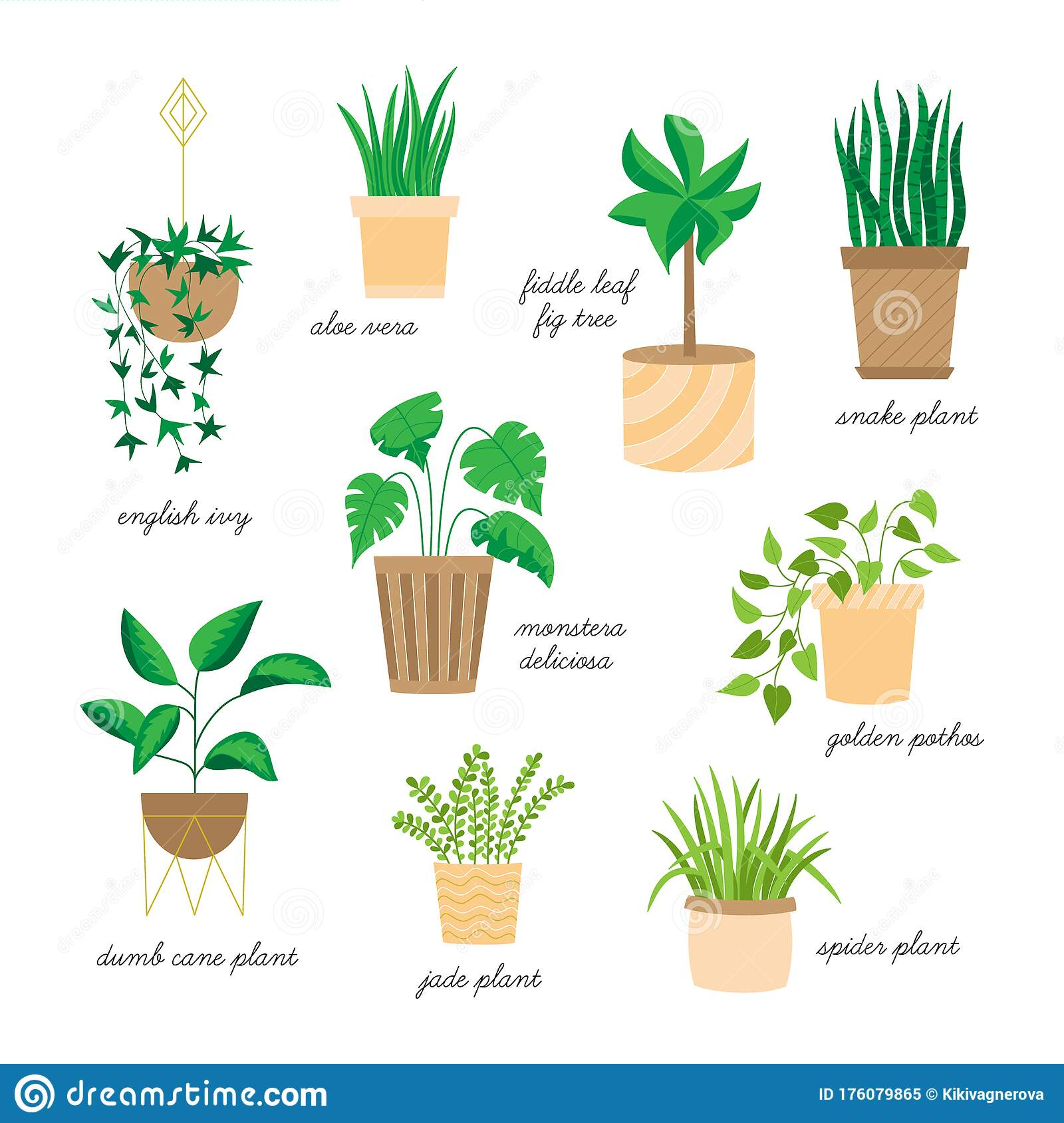Indoor Houseplants Vector Illustration Drawing Set Stock Vector Illustration Of Graphic Decorative 176079865