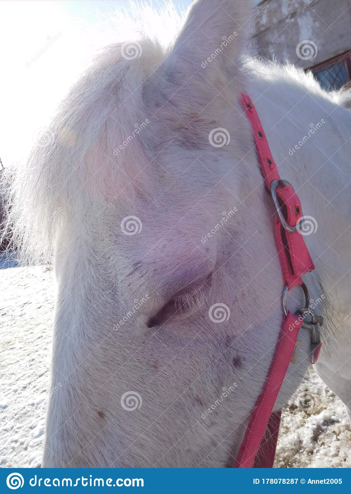 Cute Horse Face In Pink Halter Close Up Stock Image Image Of Head Person 178078287
