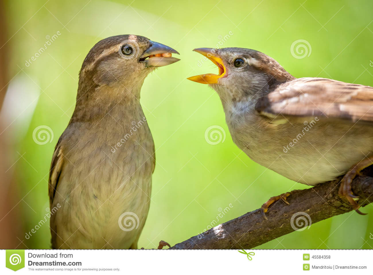 Cute House Finch couple