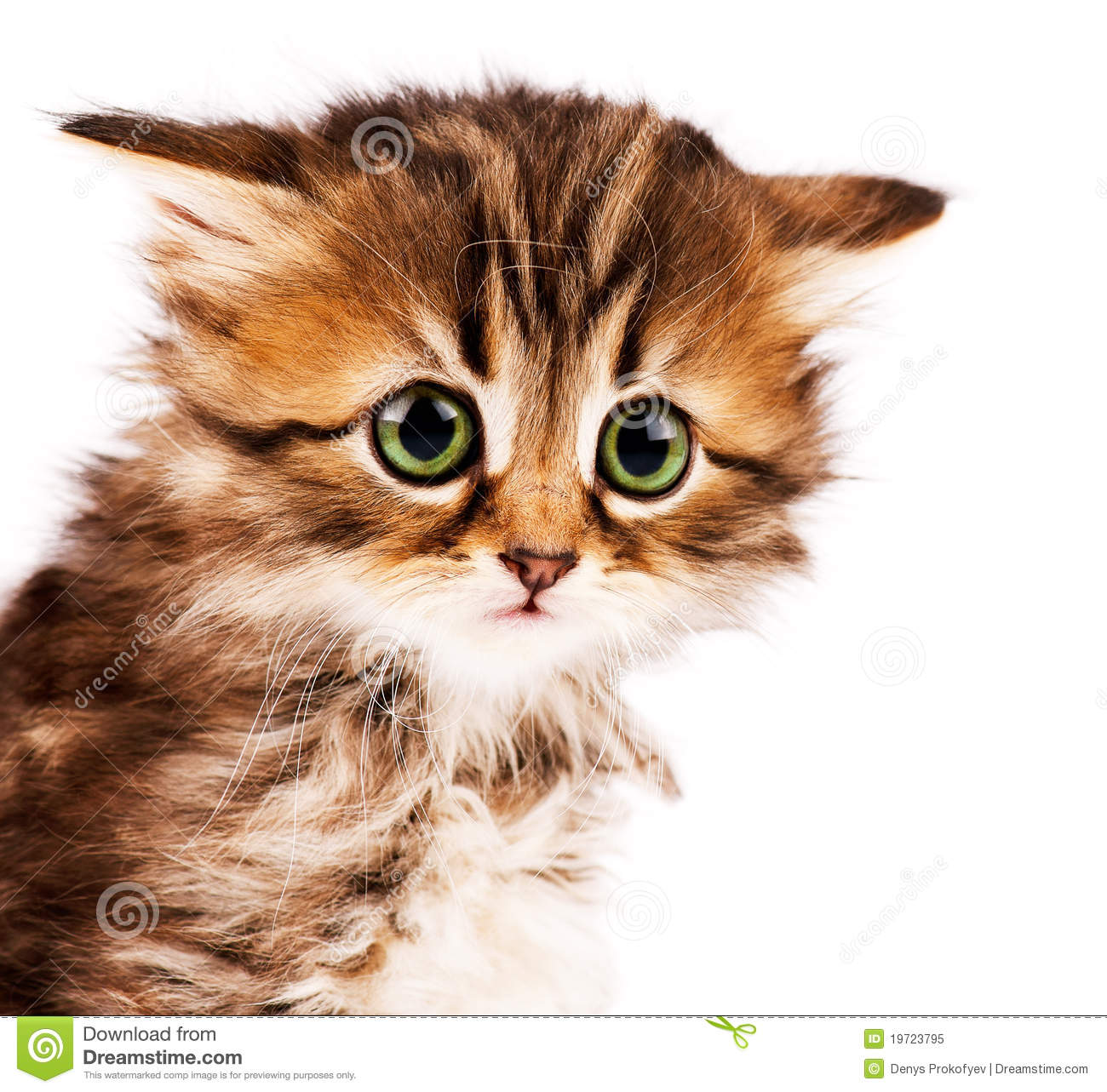 Cute kitten stock image Image of isolated carnivore