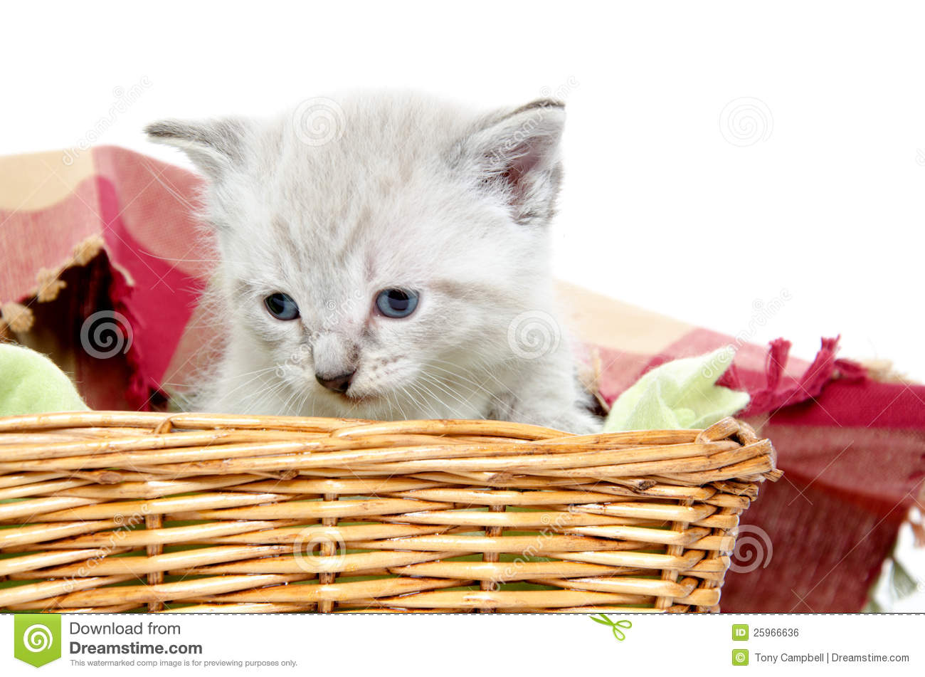 Cute Kitten In A Basket Royalty Free Stock Image - Image ...