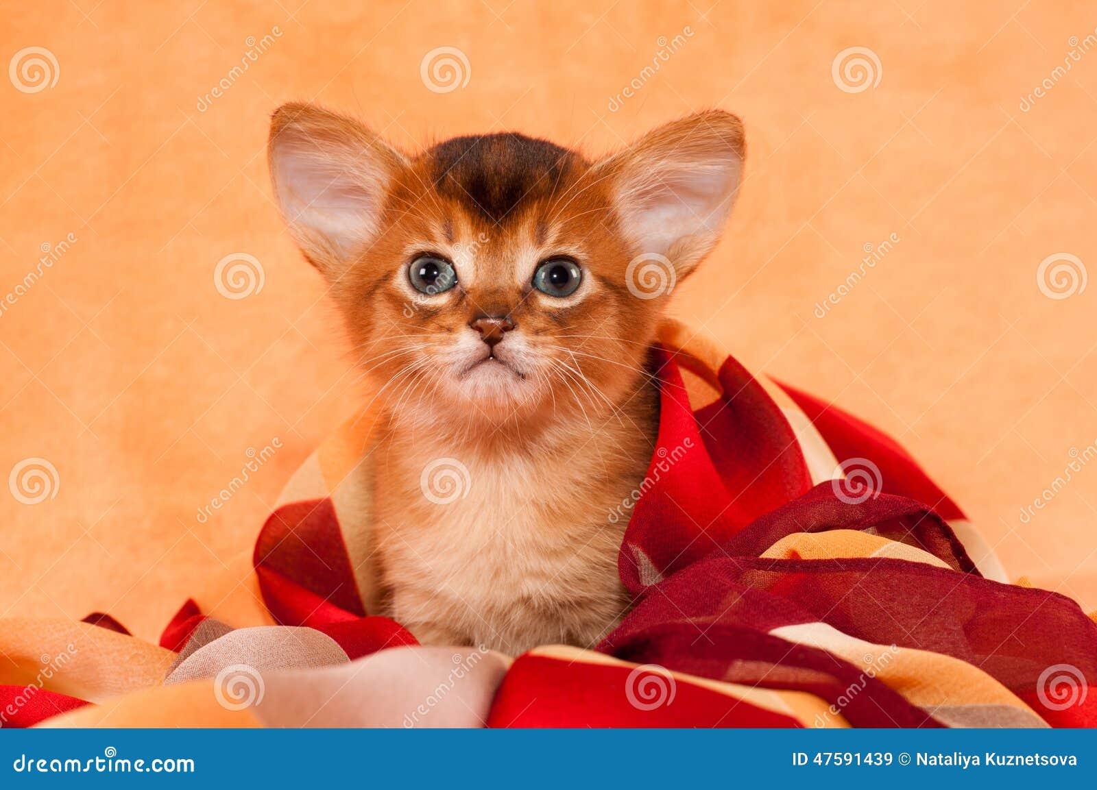 cute cat with big - photo #44