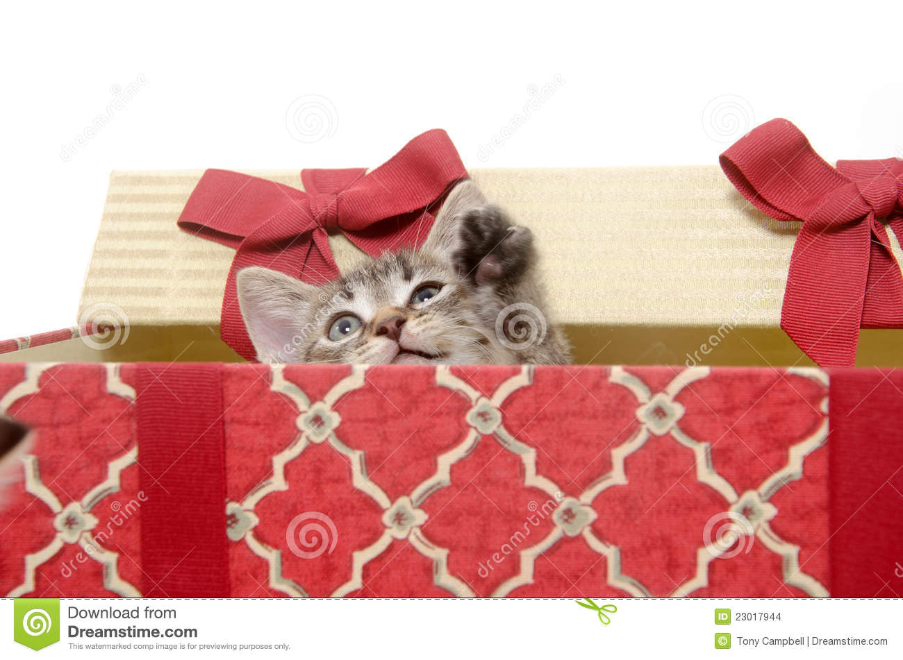 Cute Kitten In Christmas Basket Stock Images - Image: 23017944