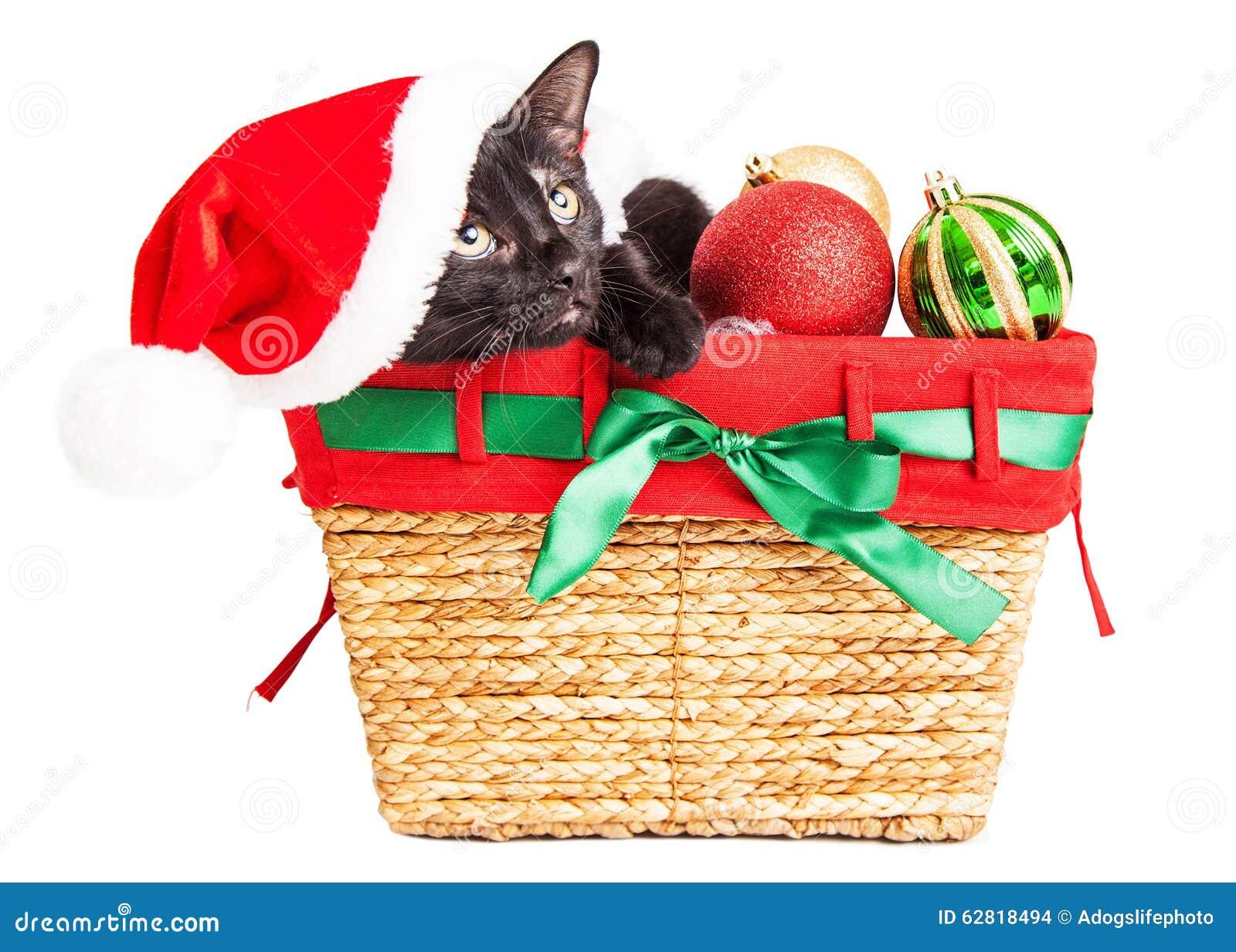 Cute kitten in christmas basket stock photo image