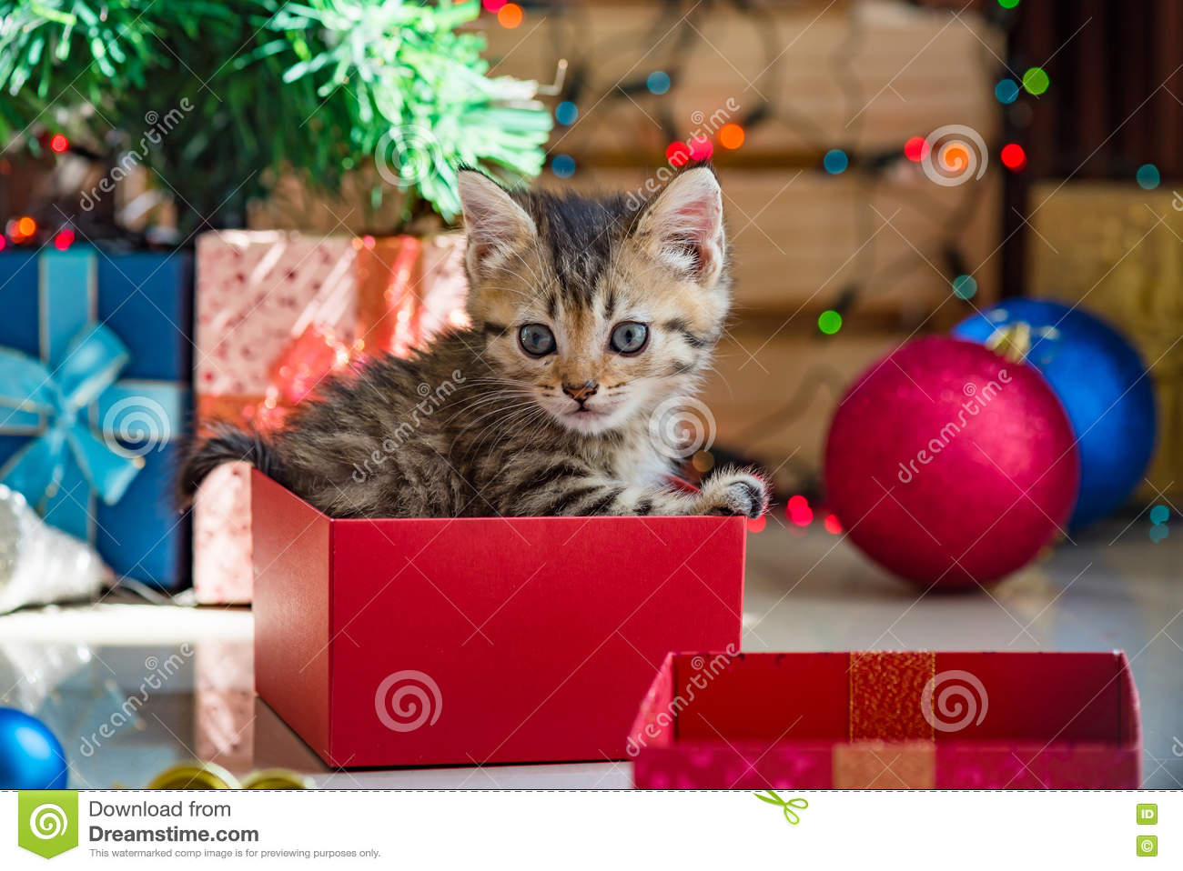 Cute kitten in christmas. stock photo. Image of domestic - 78793094