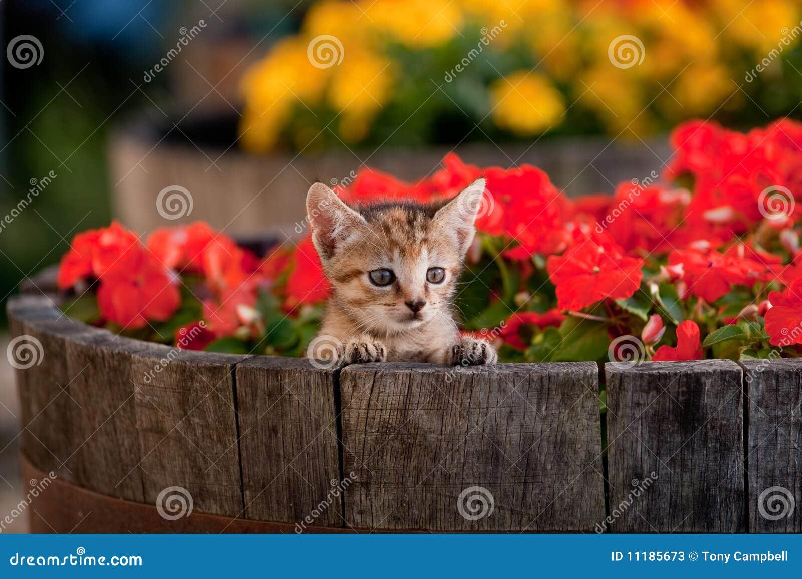 Cute Kitten In Flowers Stock Photos Image 11185673