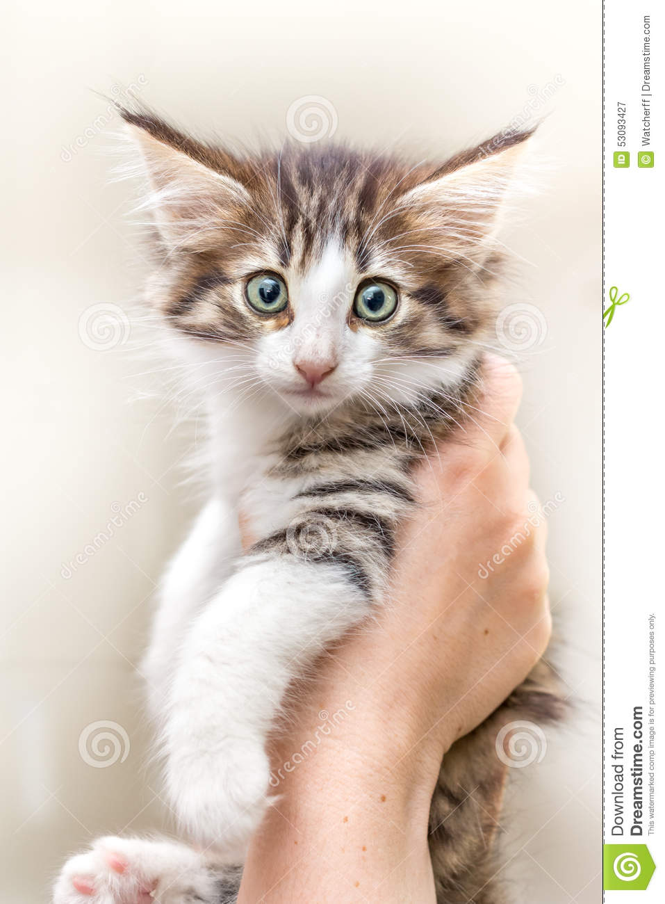 cute kitten with green eyes stock photo image 53093427