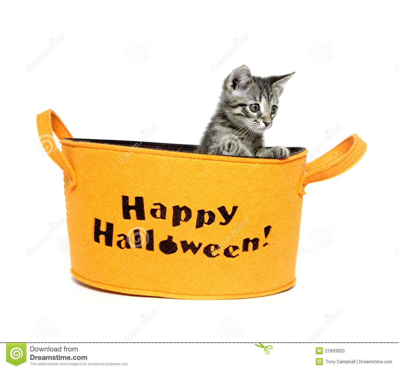 Cute Halloween Kitten Stock Photos - Image: 34042213