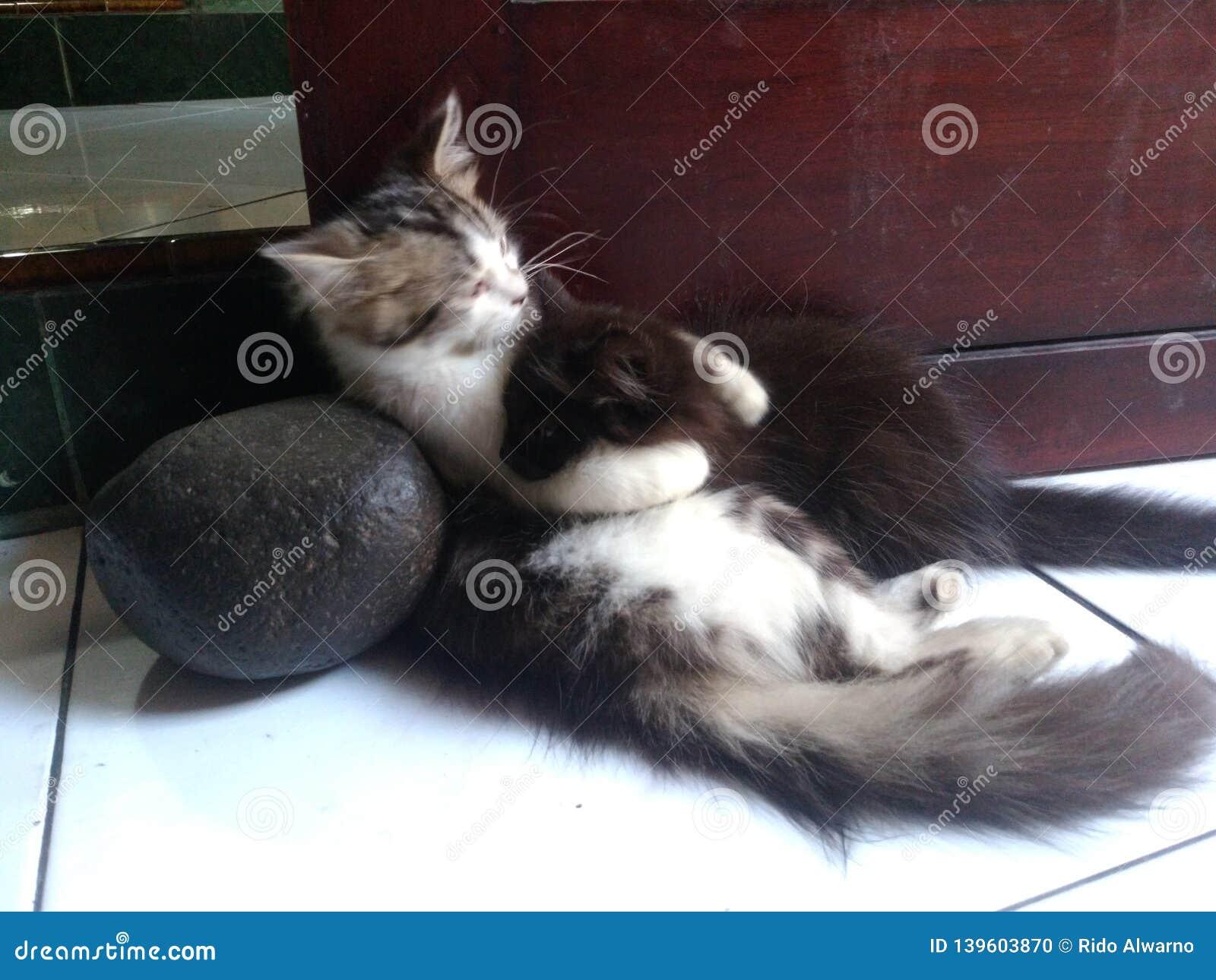 Cute kitten black and white hugging