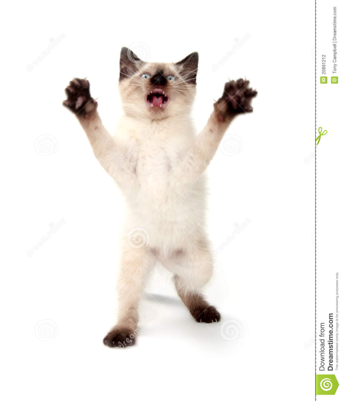 Cute Kitten Jumping Stock Photography - Image: 20891212
