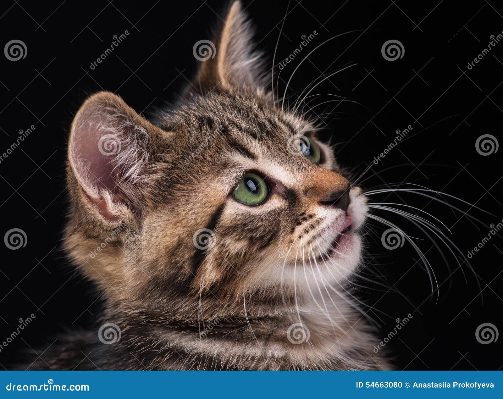 cute kitten stock photo image 54663080