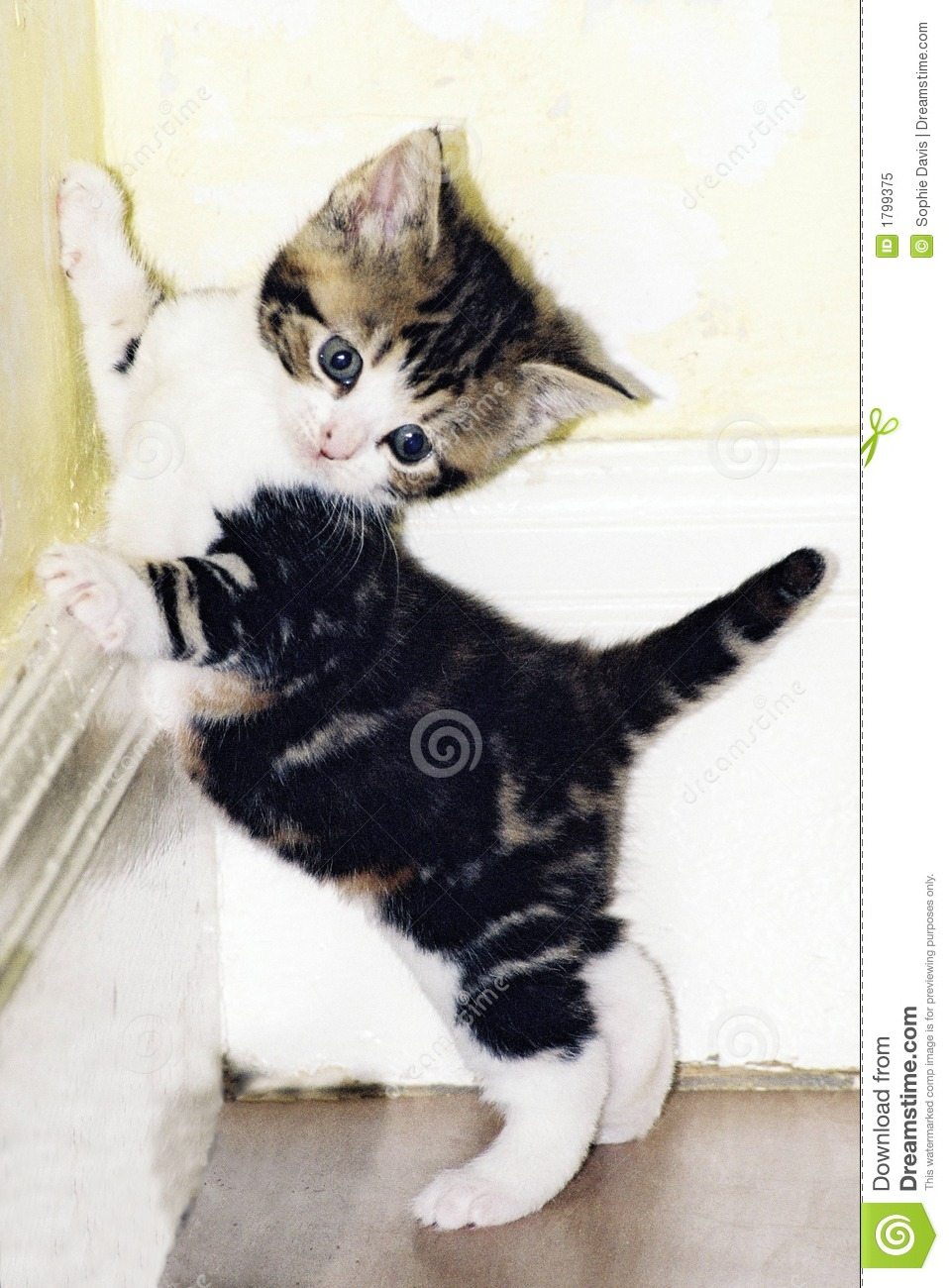 Cute kitten playing stock image Image of tabby playing