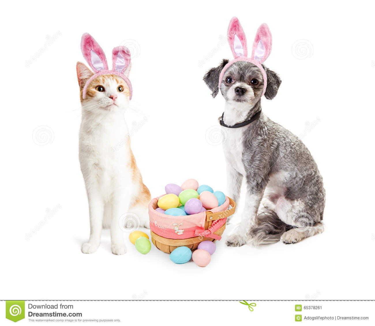 Cute Kitten And Puppy With Easter Basket Stock Image ...