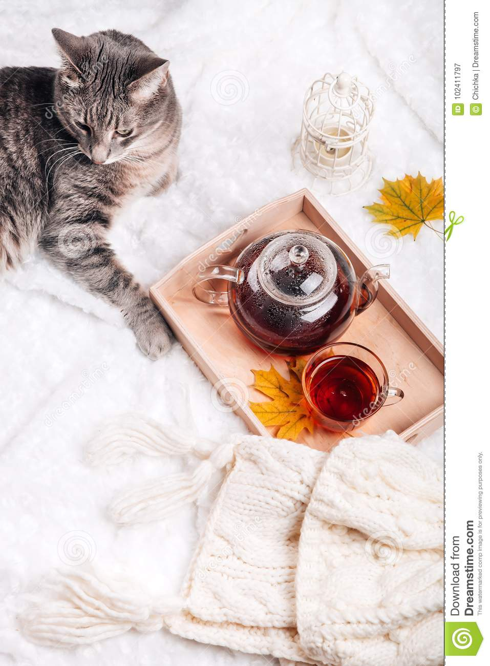 Cute Kitten Relaxing On Warm Sweater By Autumn Rustic Home Decor