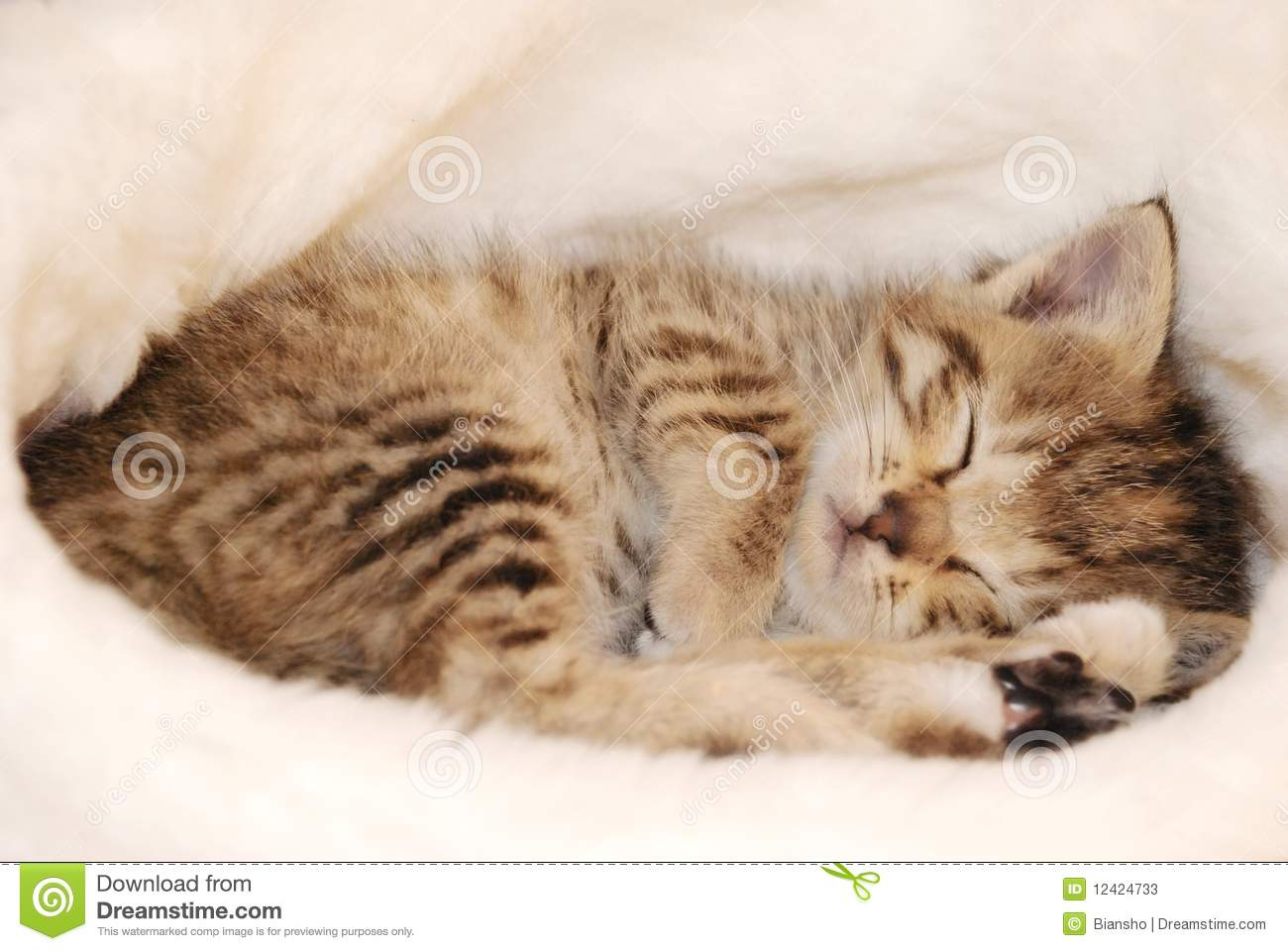Cute kitten sleeping stock image Image of cute charming