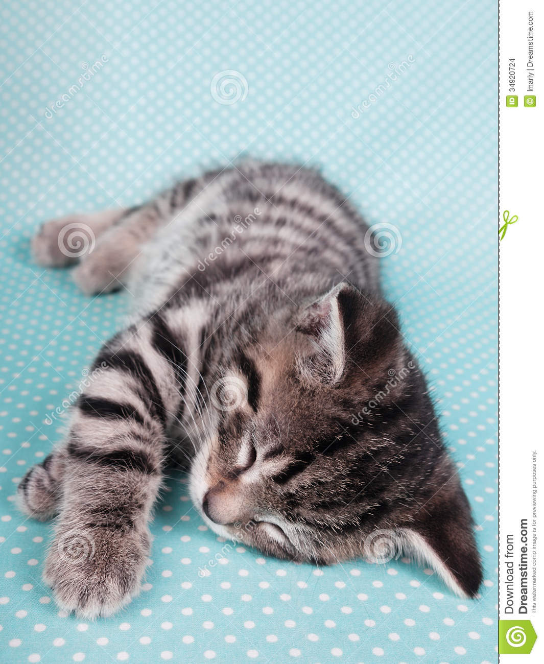A Cute Kitten Sleeping Peacefully Stock Image