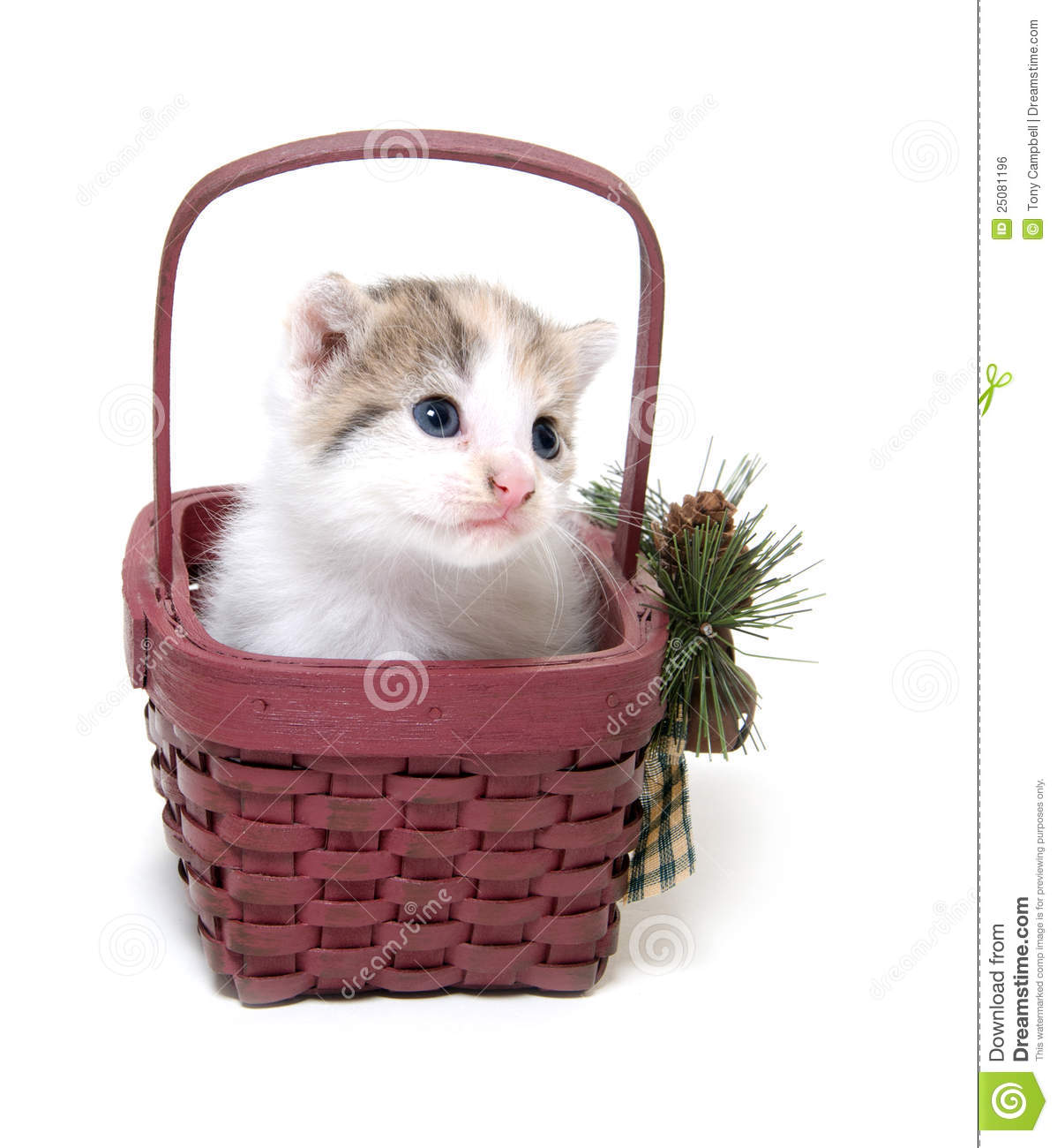 Cute Kitten In A Small Basket Royalty Free Stock Image ...