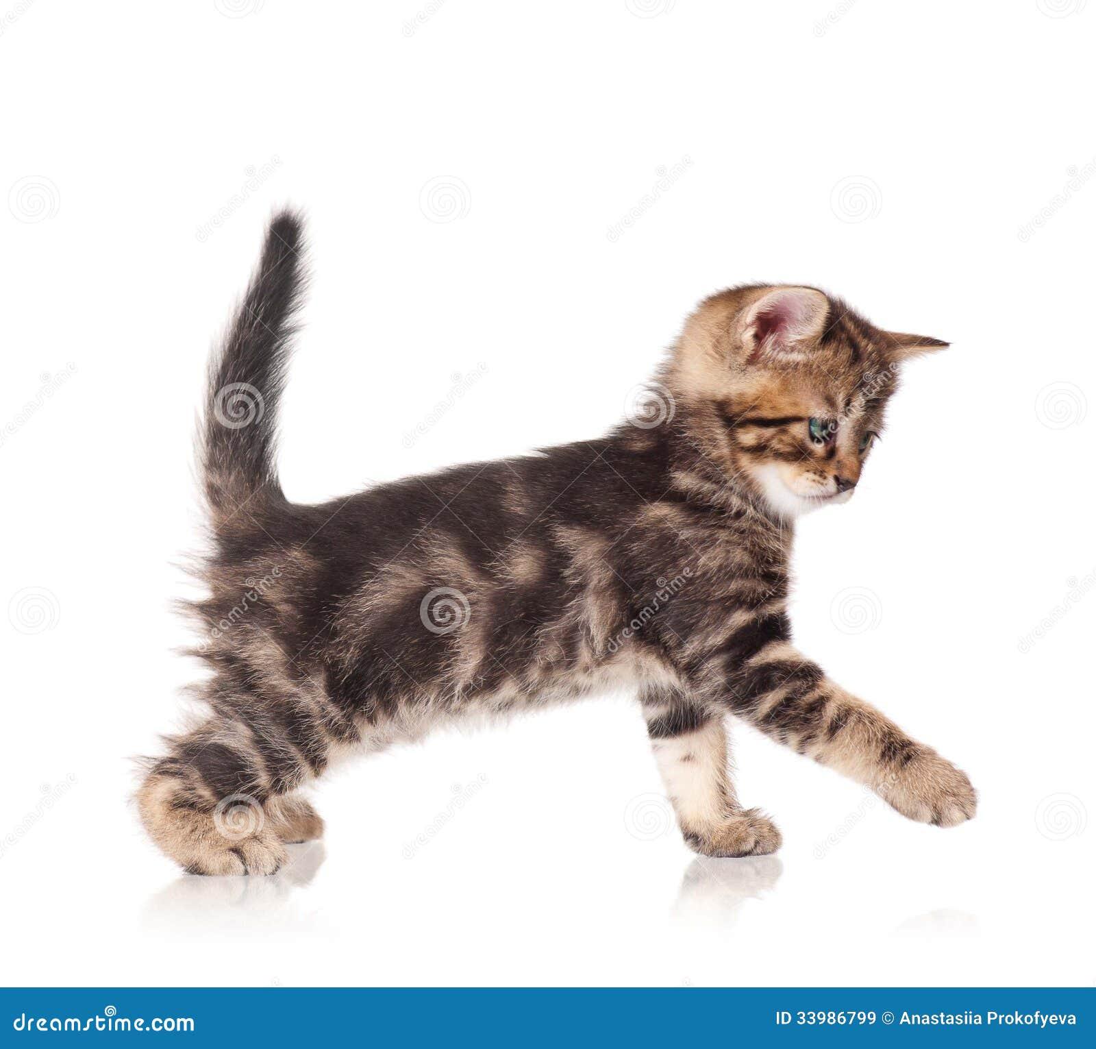 Cute kitten stock image. Image of playful, kitten, cuddly ... | 1300 x 1261 jpeg 104kB