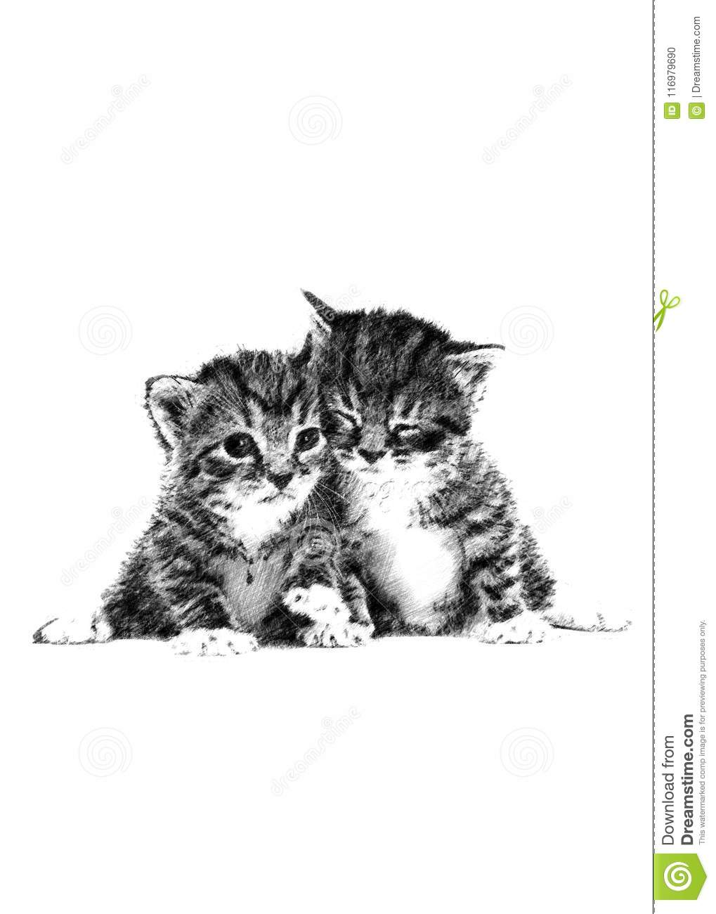 A cute kittens handrawn pencil art sketch illustration on white background