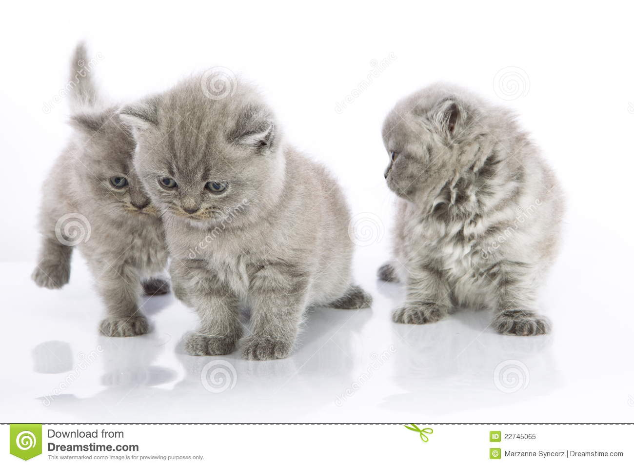 Cute Kittens Playing Royalty Free Stock Image