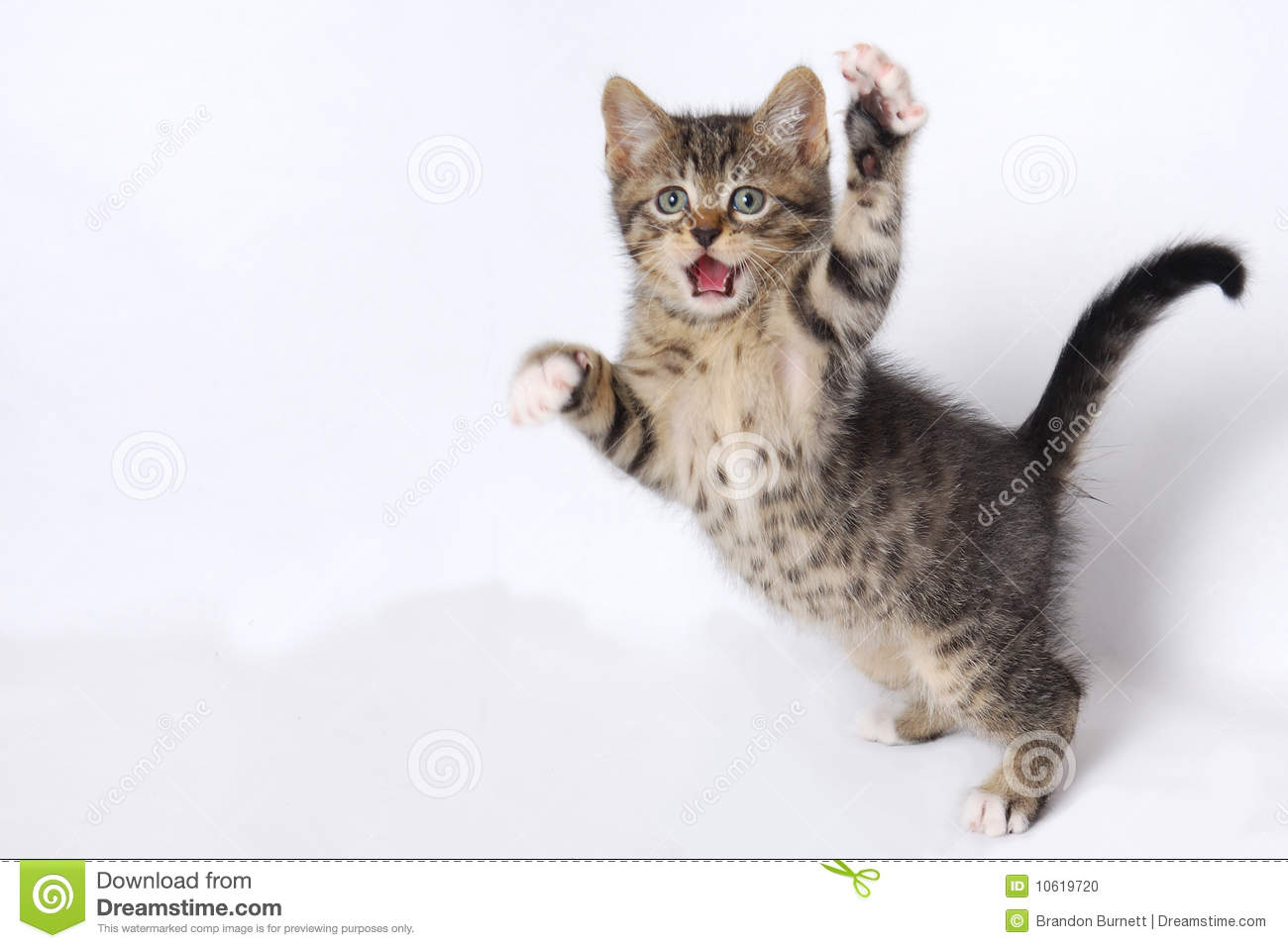 Cute Kittens Playing On White Background Stock Photo - Image: 10619720