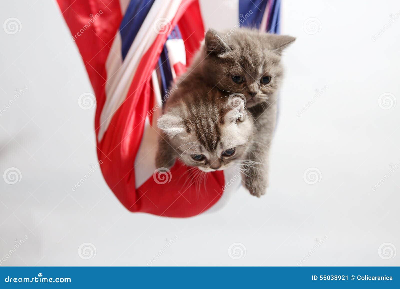 Cute kittens in a sack