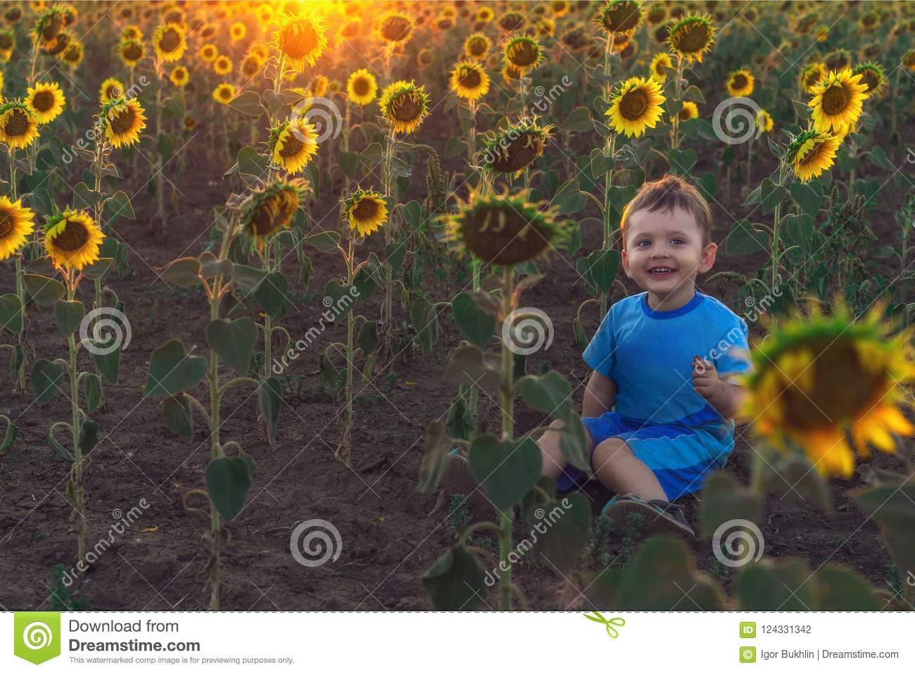 Cute little boy sitting on the ground in a field with sunflowers at sunset. The concept of a happy childhood. Outdoor recreation.