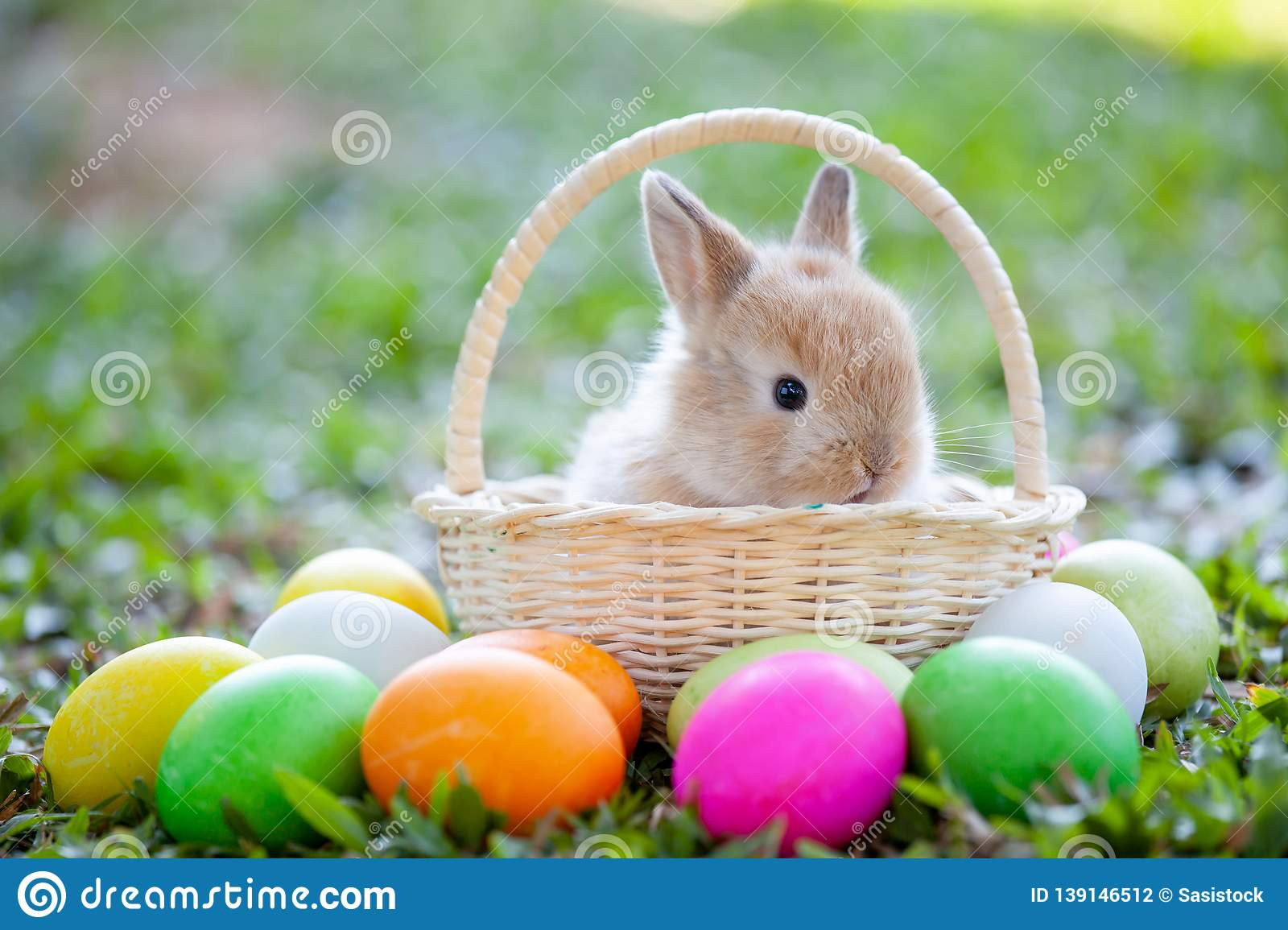 Cute Bunny In The Basket And Easter Eggs In The Meadow ...