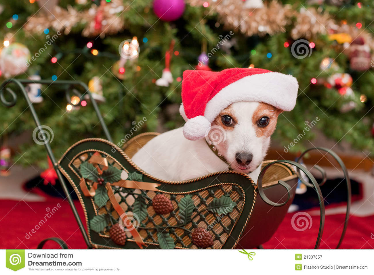 Cute Little Dog With Christmas Hat Royalty Free Stock Photography ...