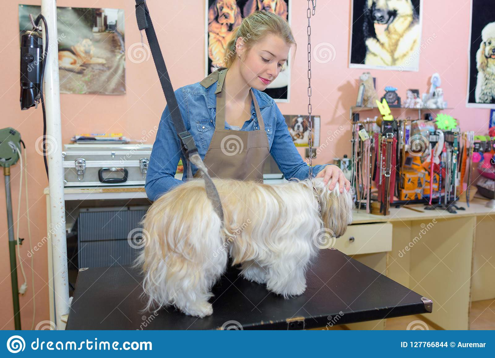 Cute Little Dog At Groomer Salon Stock Photo Image Of Grooming
