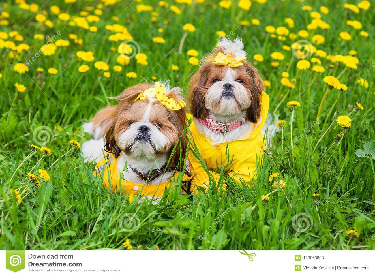 Cute little dog sitting among yellow flowers in yellow overalls with download cute little dog sitting among yellow flowers in yellow overalls with bows in green grass mightylinksfo