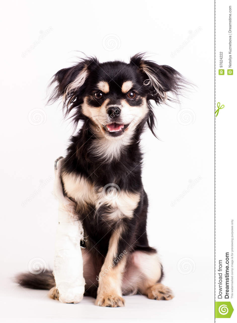 Cute little dog on white background at studio