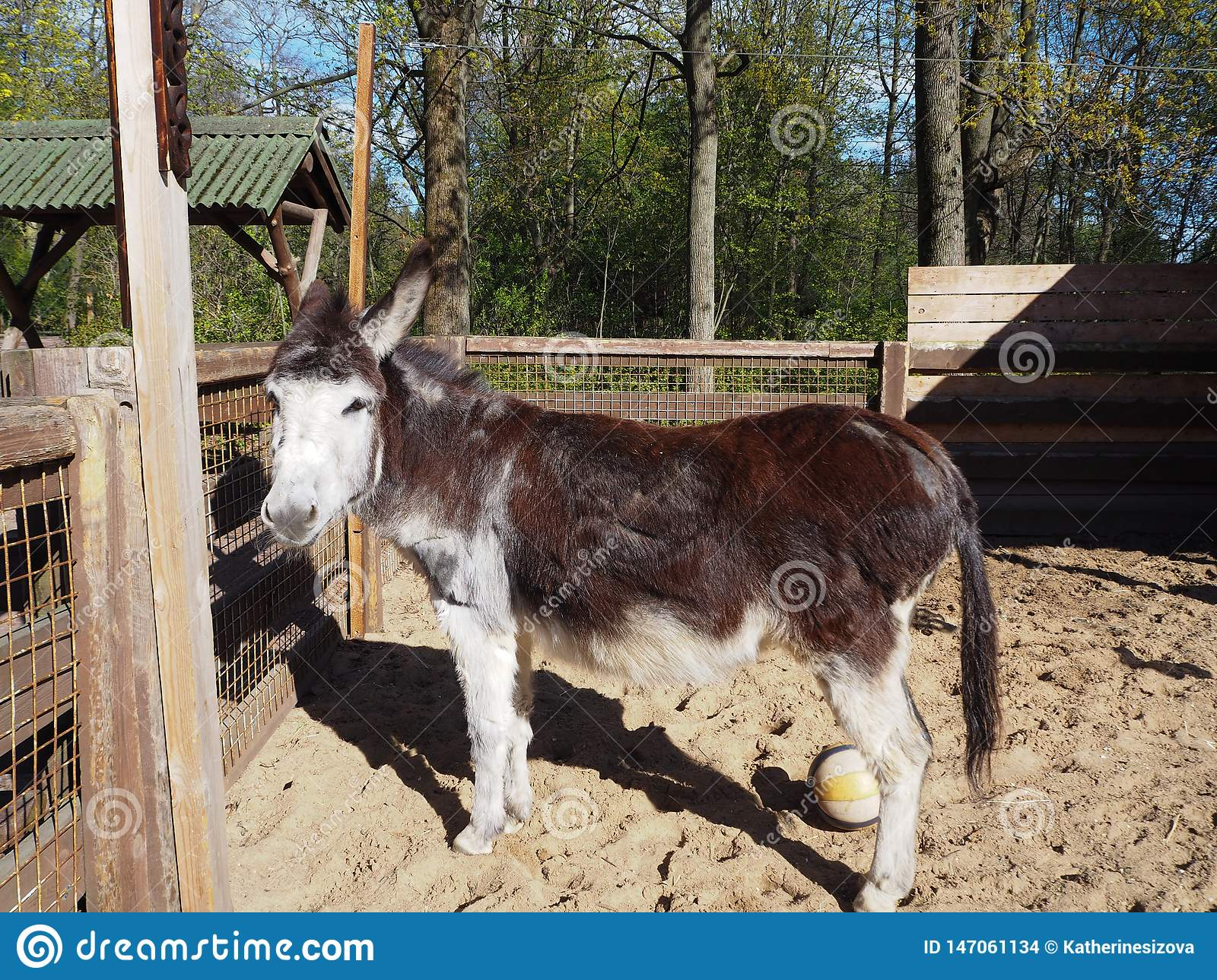 A cute little donkey is standing in the sun in the park zoo