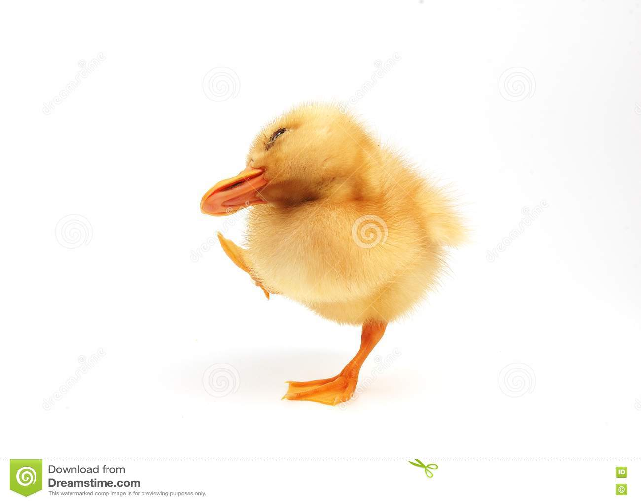 Cute little duck - photo#14