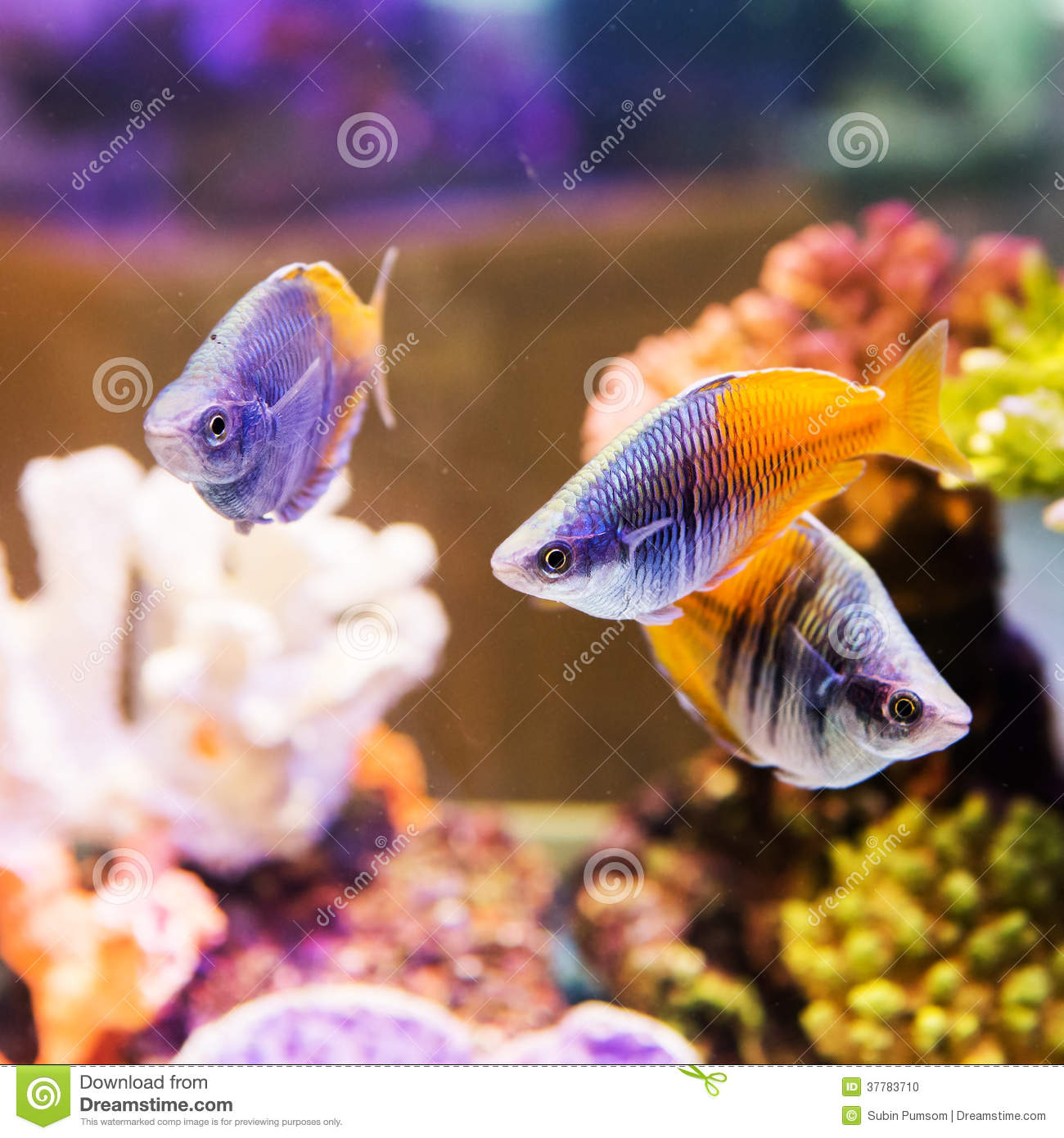 Cute little fish stock photo image 37783710 for Cute freshwater fish