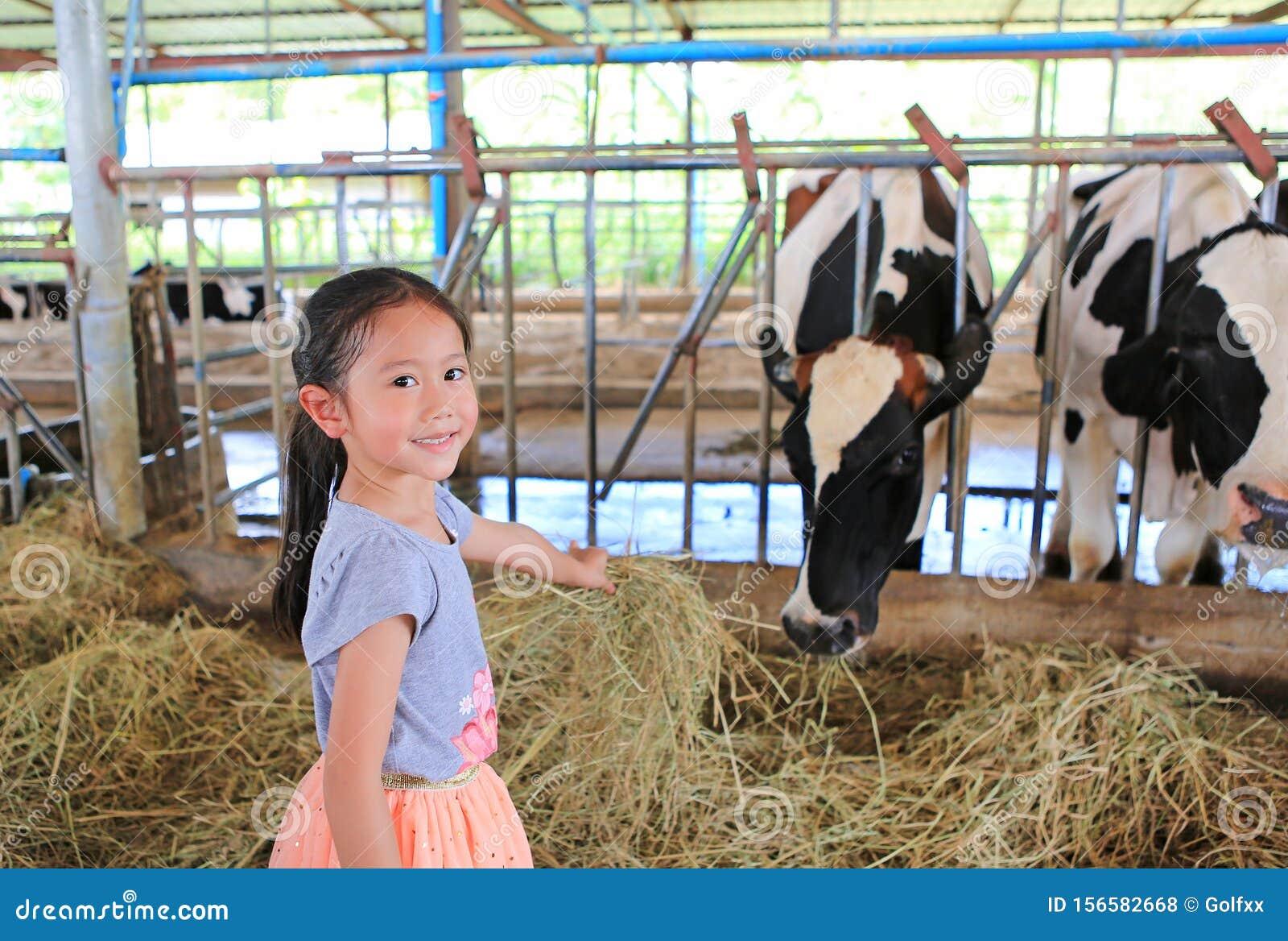 Cute little girl feeding cows by dried straw