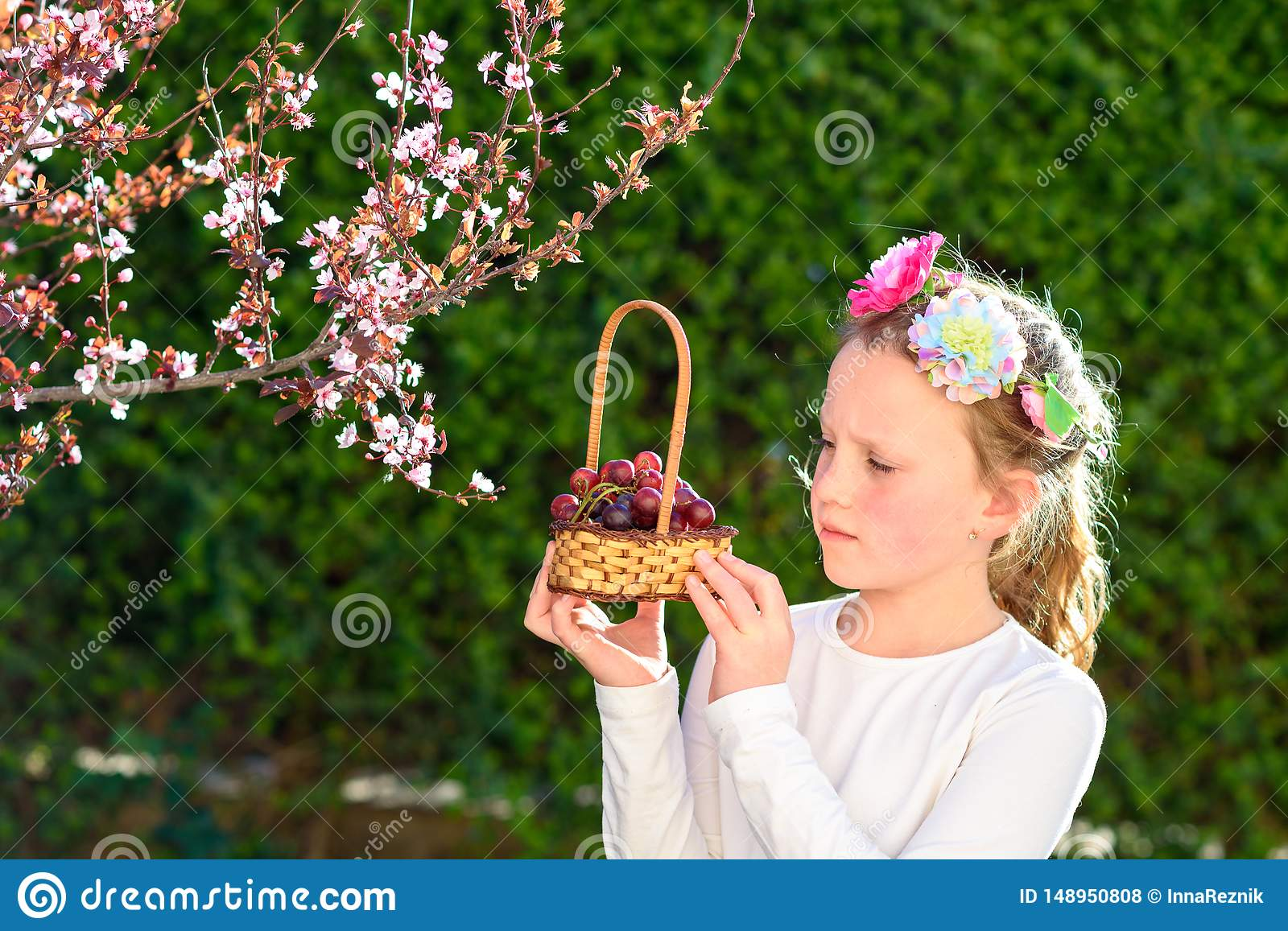 Cute little girl posing with fresh fruit in the sunny garden. Little girl with basket of grapes.