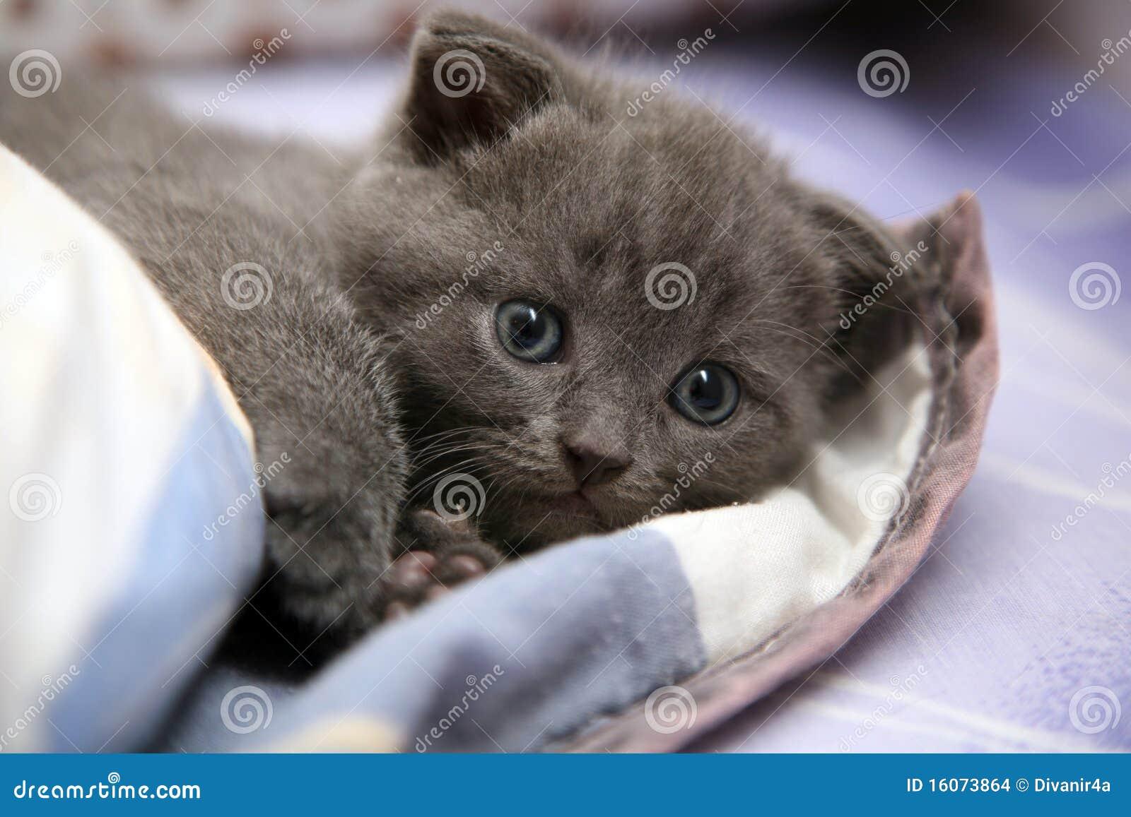 Cute Little Kitten Stock Images Image 16073864